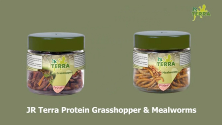 JR Terra Grasshopper and Mealworms